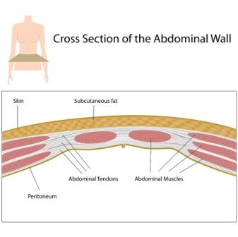 Visningsbild för hud, fett, muskler och senor