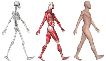 Tre bilder på kroppens muskler